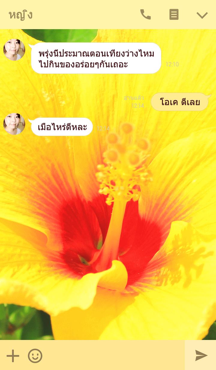 ธีมไลน์ Hawaiian hibiscus flower photo theme