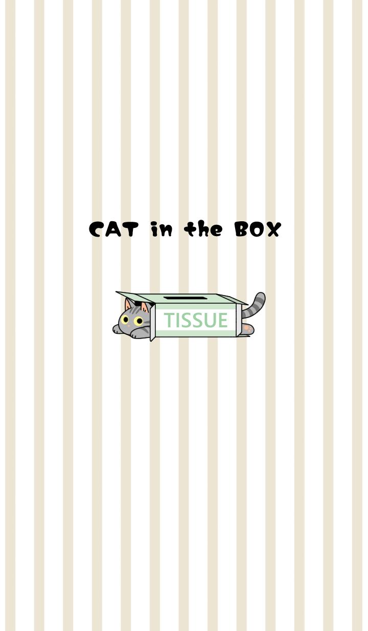 ธีมไลน์ CAT in the BOX[American Short hair]