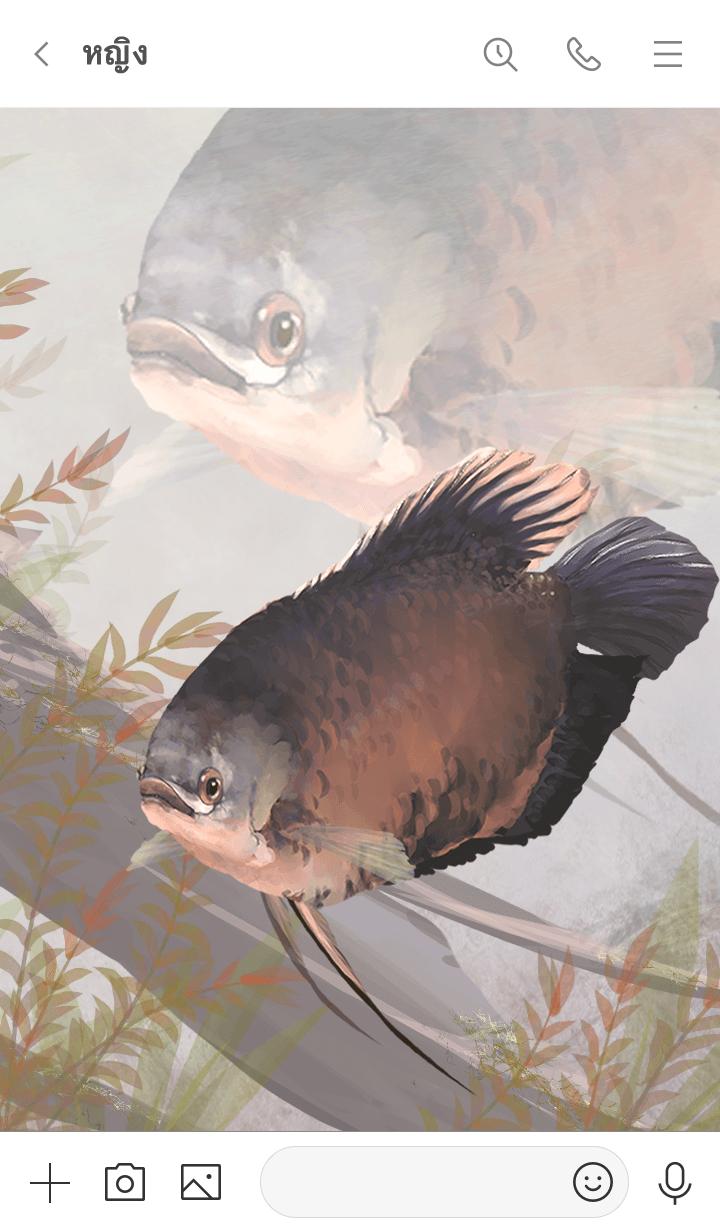 ธีมไลน์ ปลาแรดแม่น้ำโขง(Osphronemus exodon)