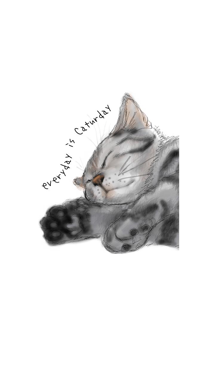 ธีมไลน์ everyday is caturday