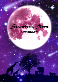 Strawberry Moon Savannah