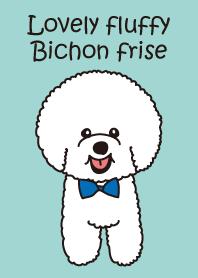 Lovely fluffy Bichon frise