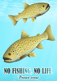 BROWN TROUT 1
