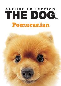 THE DOG Pomeranian