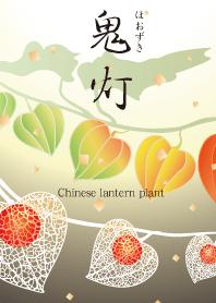 ธีมไลน์ Chinese lantern plant
