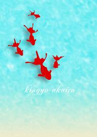 kingyo-akairo