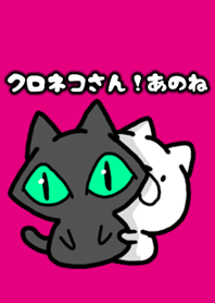 look at black cat