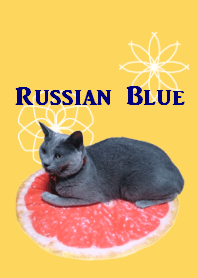 Russian Blue REAL