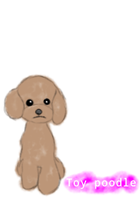 It is theme the toy poodle