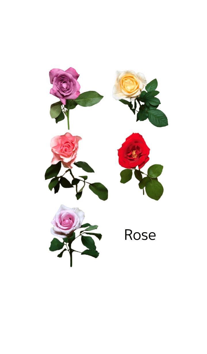 薔薇(バラ)の着せかえ