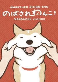 Smoothed Shiba-Inu Theme